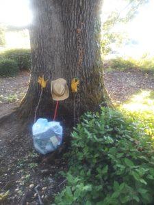 Oak Tree on Harmony Road